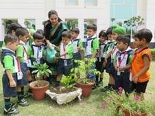 Plant a Sapling Activity